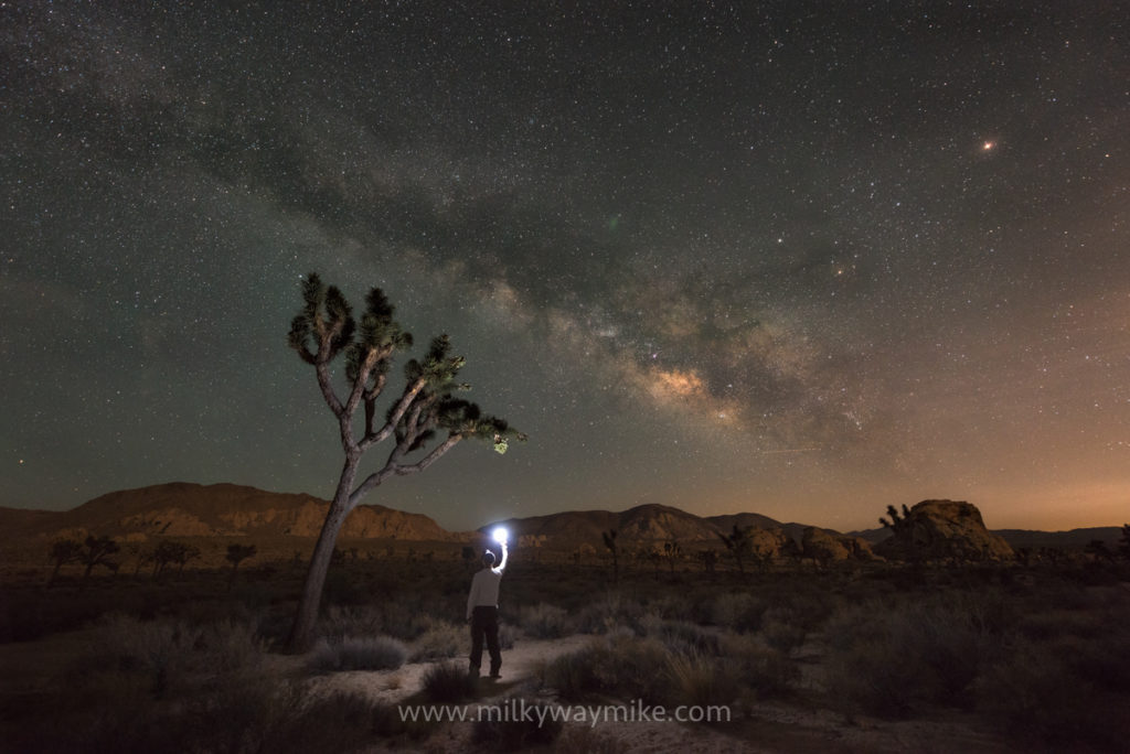 Midnight Explorer Finding A Joshua Tree