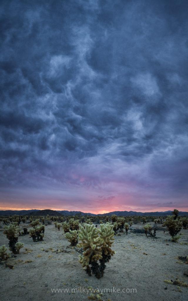 Cholla Cactus Garden Clouds
