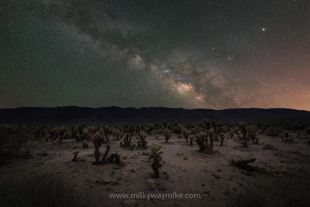 Cholla Cactus Garden Milky Way