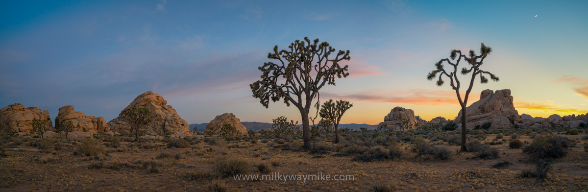 Joshua Tree Panorama Sunset
